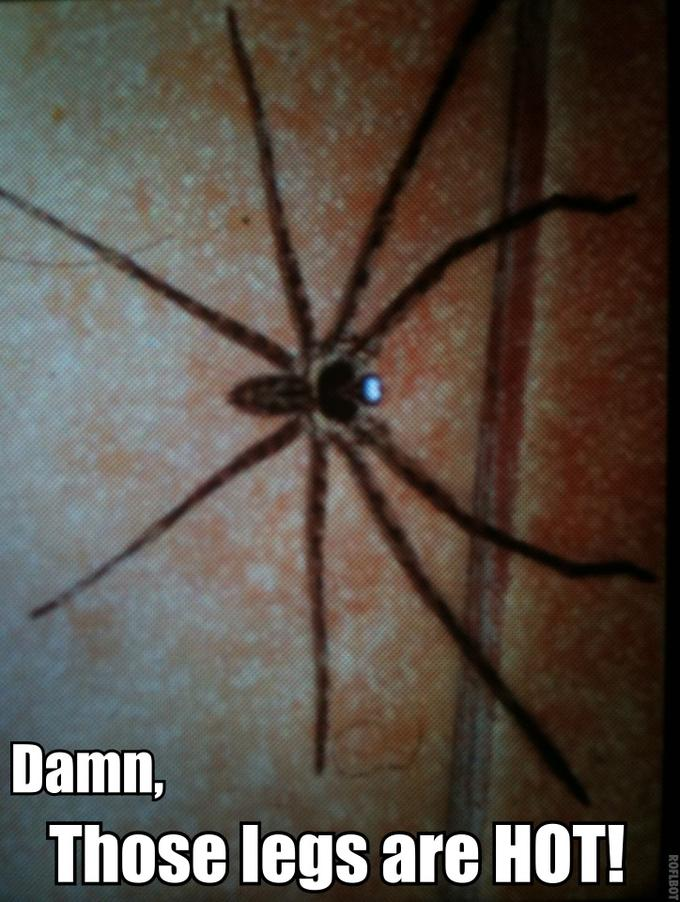 Big spider with HOT LEGS
