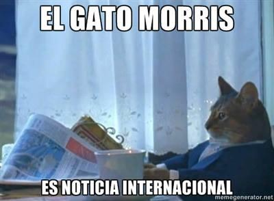 Morris the cat is in international notes.