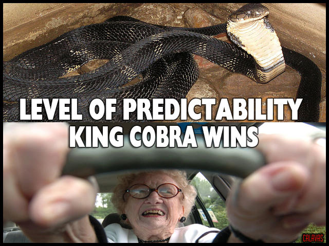 Grandma vs. KIng Cobra