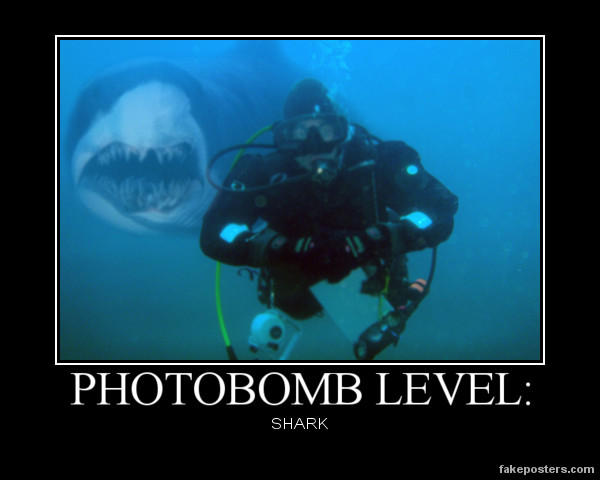 Photobomb Shark