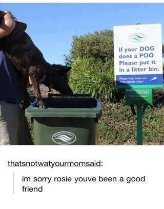 "I hate it when my dog ""does a poo"""