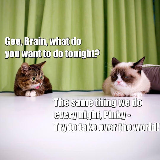 Pinky And The Brain Quote