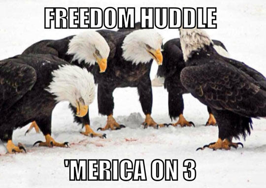 Freedom Huddle