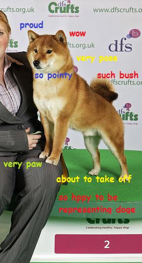 proud doge