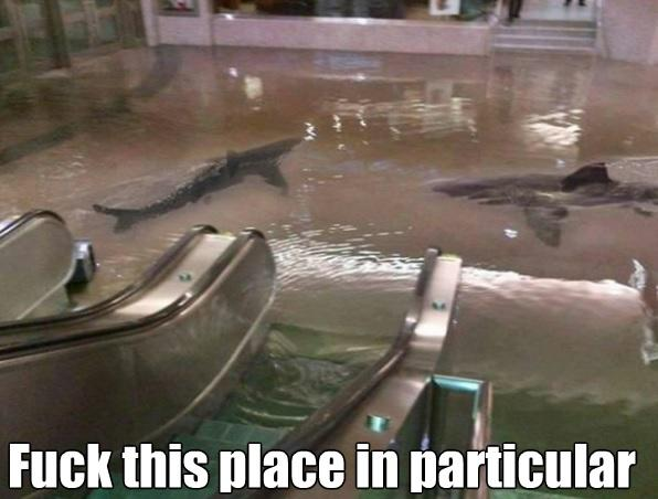 Sharks... in a mall?