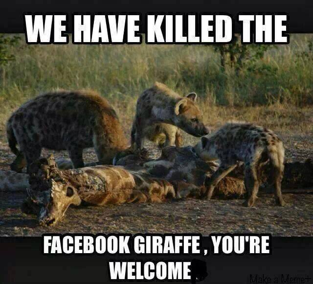 Giraffe Backlash