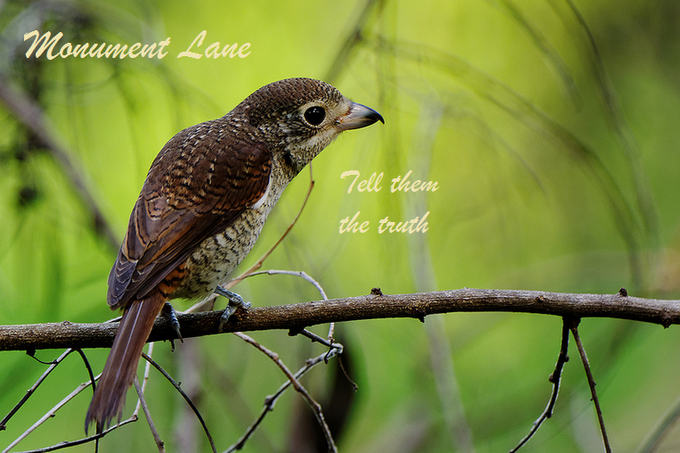 Monument Lane: Tell them the truth