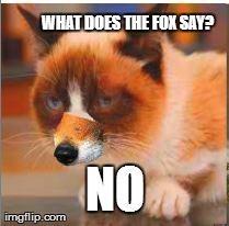 Fox Grumpy Cat