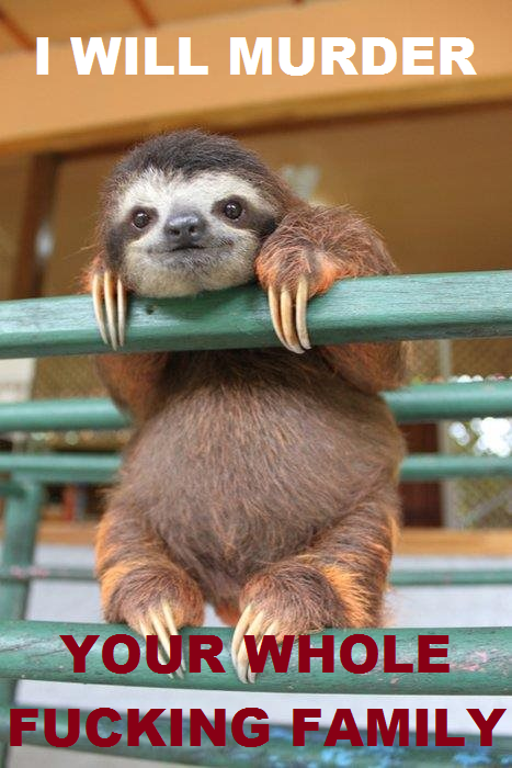 Friendly baby sloth
