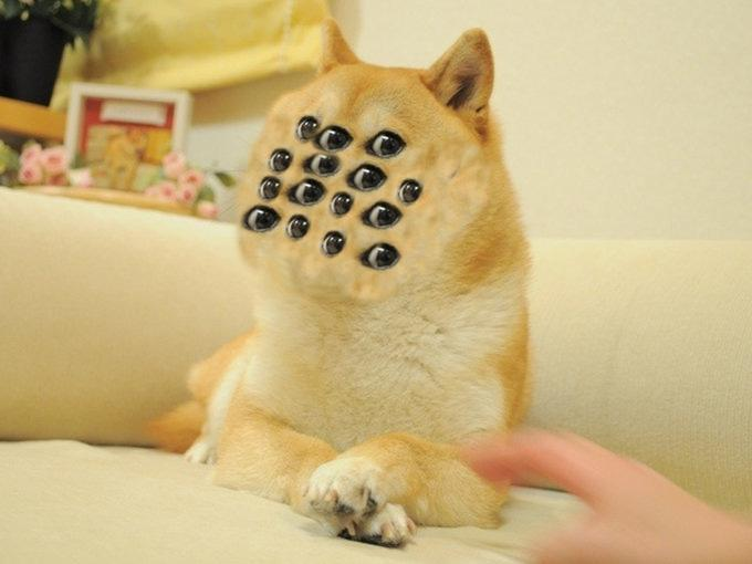 THE ALL-KNOWING DOGE