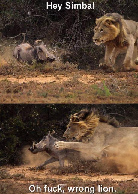 Hey Simba! Wrong Lion