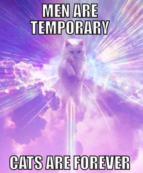 Meow meow mofos