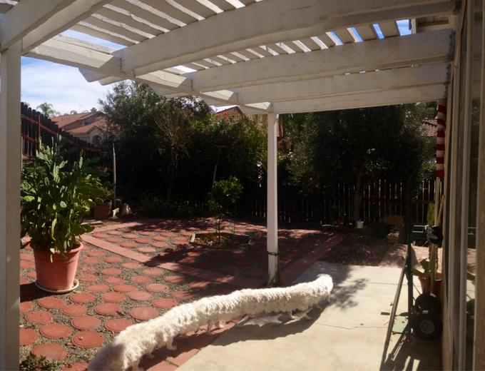 Taking a panorama of the yard when the dog walked by. The result...
