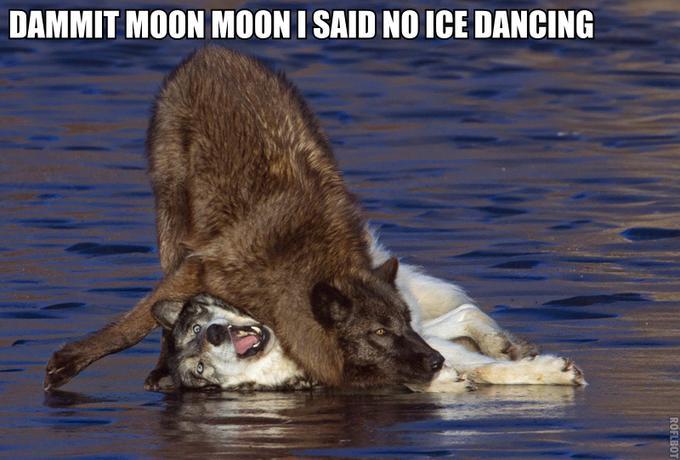 Olympic Moon Moon