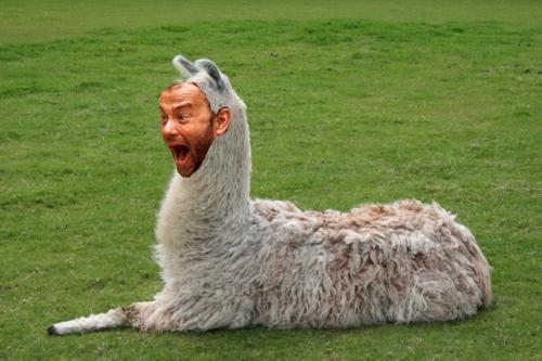 Tom Hanks is a Llama