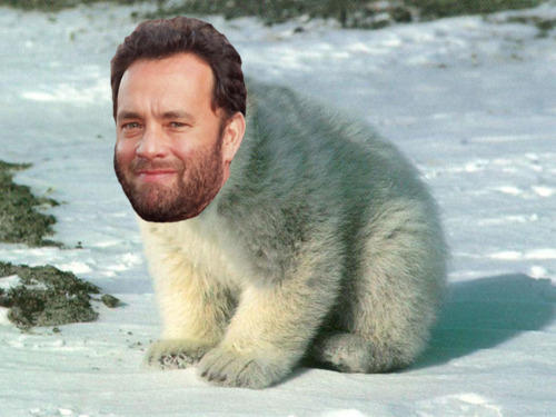 Tom Hanks is a Polar Bear