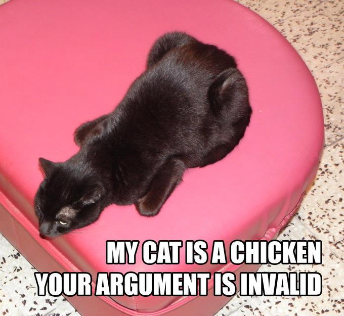 My Cat is a Chicken