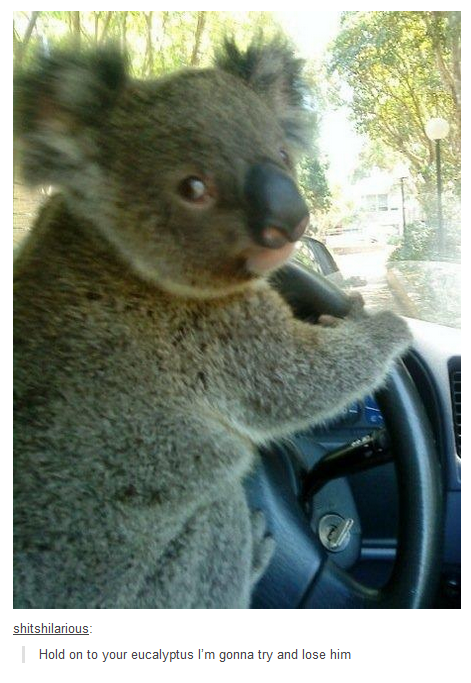 Hold On to Your Eucalyptus!