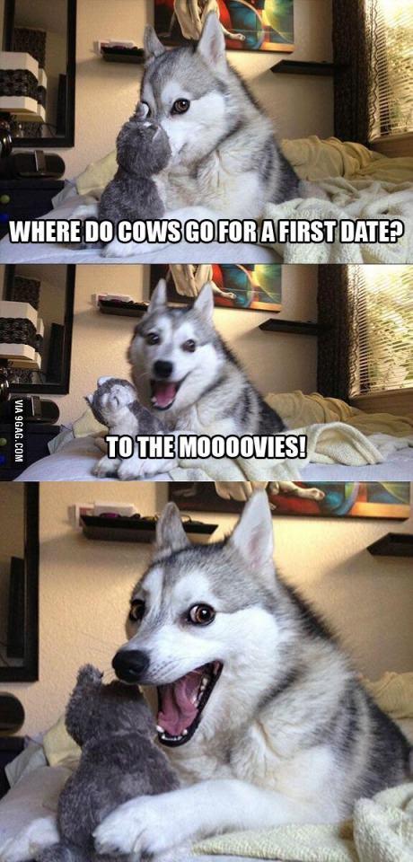 Pun Dog Moo-vies