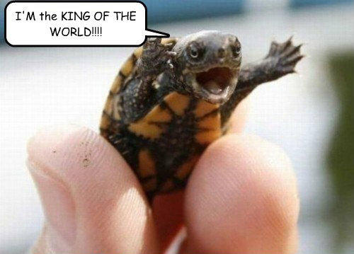 Turtle King of the World