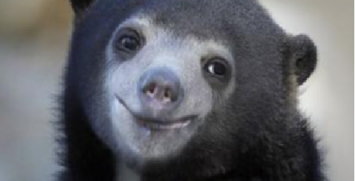 Smile Bear