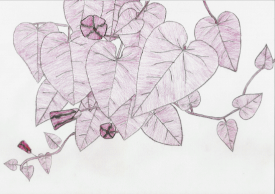SCP-754: Illustrated Climbing Vine