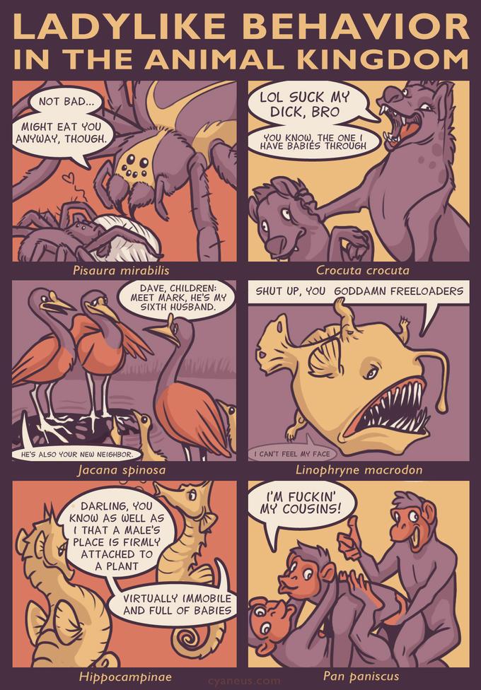 Ladylike Behavior In The Animal Kingdom