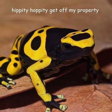 gadsden frog