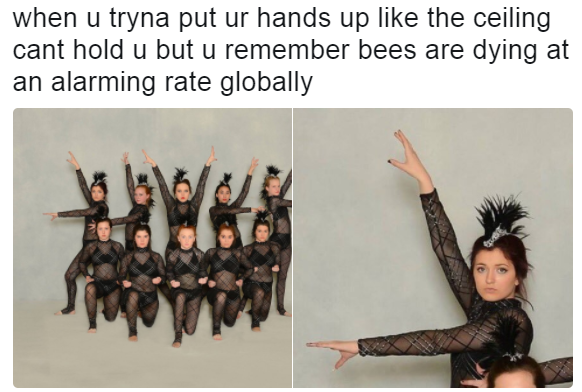 7cf bees are dying at an alarming rate know your meme