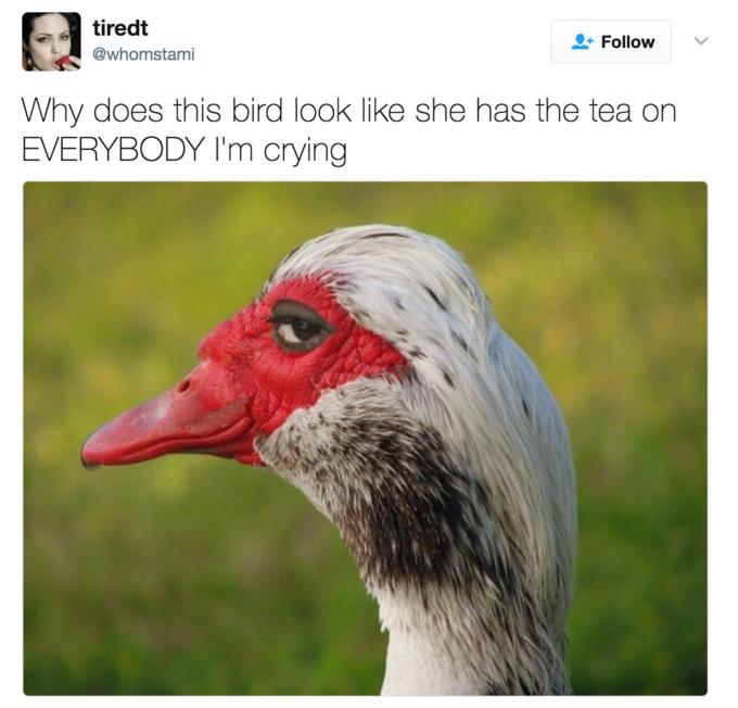 464 sly duck know your meme,Duck Meme