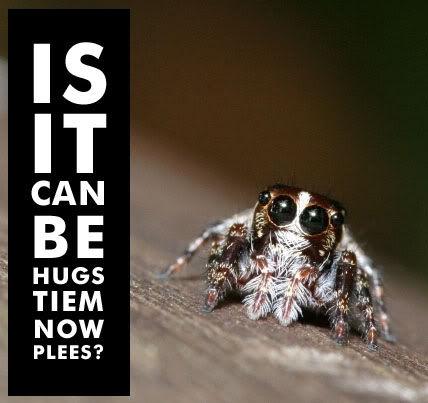 Is_it_can_be_hugs_tiem_now_spider.jpg