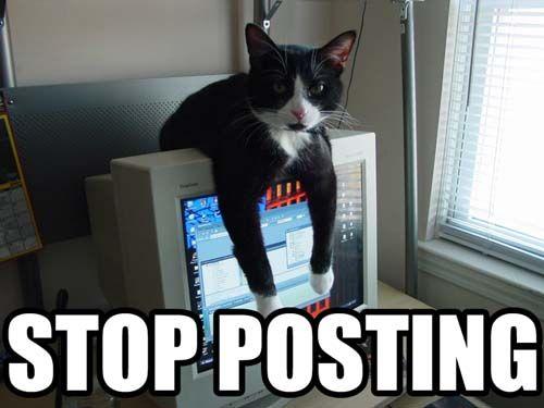 stop_posting_cat.jpg