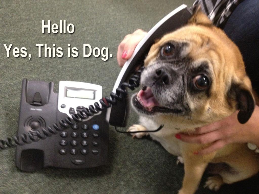yes dog meme - photo #27