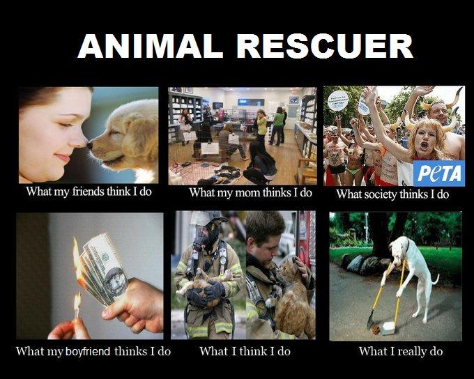 Dog Adoption Meme