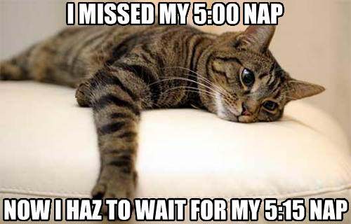 [Image - 376342]   First World Problems Cat   Know Your Meme