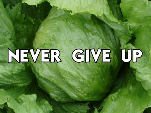 "I Give Up Meme: Lettuce / It Says ""Never Give Up"