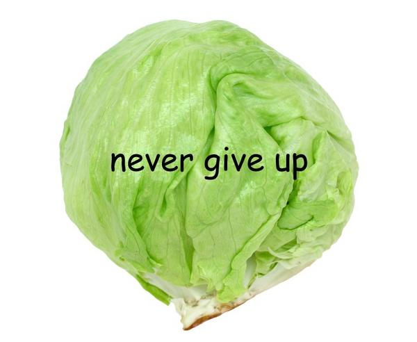 "[Image - 465449] | Lettuce / It Says ""Never Give Up ..."