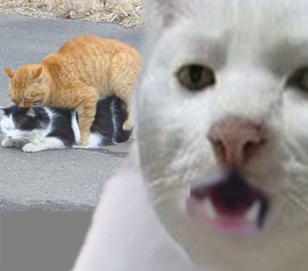 [Image - 562427] | Serious Cat | Know Your Meme