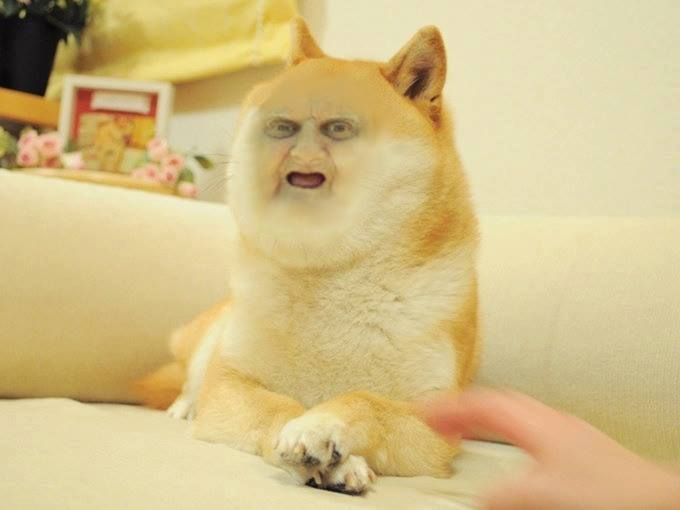 Wat Doge  Doge  Know Your Meme