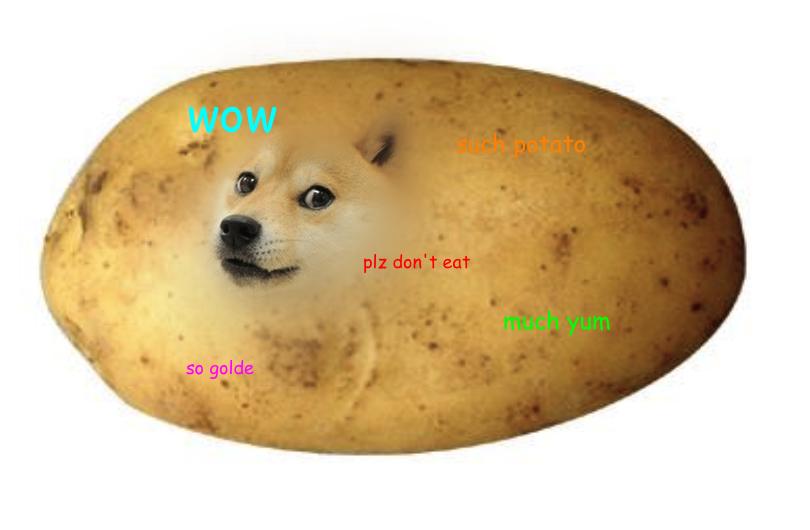 10 Dog memes  quickmeme
