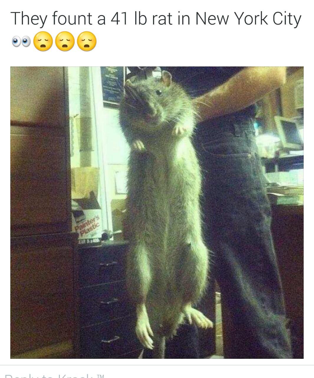 Фото больших крыс 18 фотография