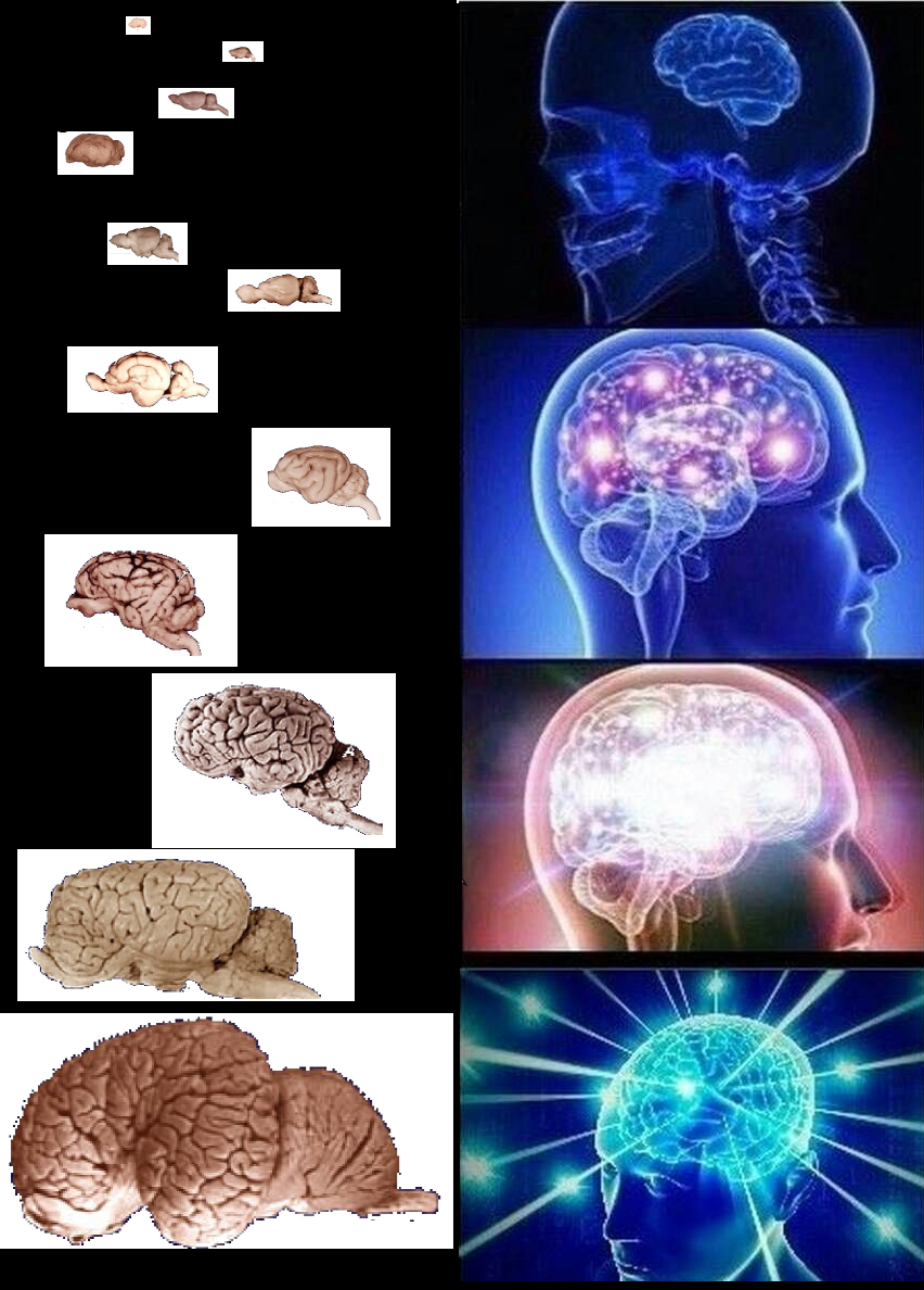 brain meme expanding template generator conclusion blank logical know ide funniest random